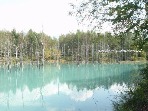 青の池1.jpg