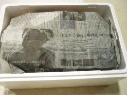 ホタテ2-8.jpg